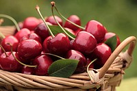 A basket of sweet cherries