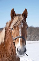 Photo of horse in wintertime a sunny day