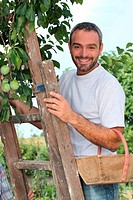 man gathering fruits