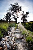 Stone path leading to tree