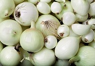 multitus white onion Allium ascalonicum of various sizes