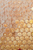 Honeycomb cells, closed with opercula