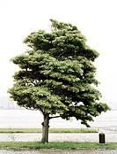 Tree in Tokyo