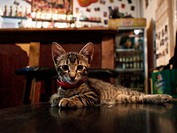 Tabletop bar cat