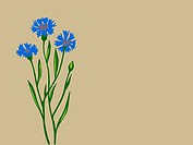 cornflower silhouette on brown background