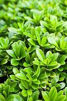 bush plants