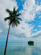 tropical island _ sea, sky and palm trees