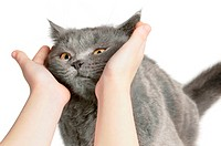 Happy cat is pleased with hand stroking