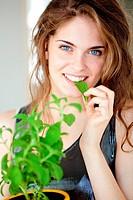 Stevia Stevia rebaudiana, natural sweetener.
