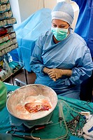 Partial removal of a liver from a living donor by laparoscopy for a transplantation. Here, graft preparation. Department of Surgery of Pr Olivier Soub...