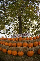 Millwood, Virginia: October 17, 2008. Nalls Farm Market displays pumpkins at the 2008 Shenandoah Valley Hot Air Balloon and Wine Festival at Historic ...