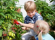 Germany, Bavaria, Boy and girl picking tomatoes in garden
