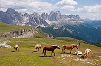 Italy, Horses grazing in meadow, Rosengarten in background at South Tyrol