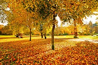 Wonderful autumnal scene in the park of Falkirk, Scotland