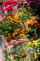 Variety of flowers sold in the market in Paris