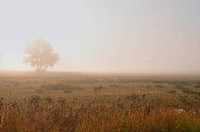A horozontal landscape of a misty meadow with a lone tree shrouded by morning fog.