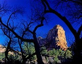 Zion National Park, Utah. USA. Paria Point framed by cottonwoods in late autumn. Kolob Canyons.