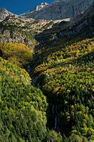 Autumn forest at Bujaruelo Valley, Ordesa & Monte Perdido National Park, Huesca, Aragon, Spain
