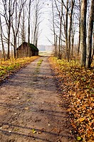 Gravel road, abandoned house and autumn trees.