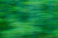 Blurred foliage