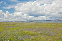 Spring grasslands and mountains in Centennial Valley near Lakeview, MT