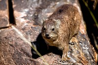 a dassie rock at quiver tree forest namibia africa