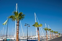 Palm Trees and Masts