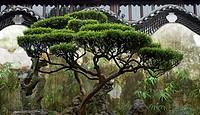 Art of Chinese garden design, Yu Gardens in Sahnghai