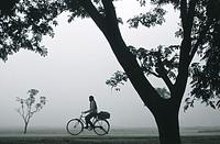 During a foggy morning, a man is riding a cycle. Teraï region, Nepal.