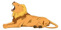Lion, Male, Yawning, vector illustration