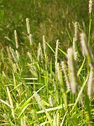 Open field of tall grass and weeds.