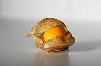 fruit in shell