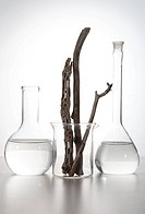 Labglass with Wood Branches