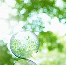 Trees are reflected on a transparent ball.