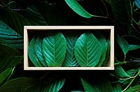 Cherry leaves in wooden box