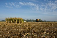 corn field harvest with tractor and combine