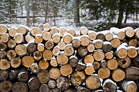 wood outside stacked up in snow