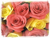 Flowers of the seasons: pink and yellow roses