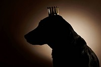 Silhouette of Labrador Retriever wearing crown