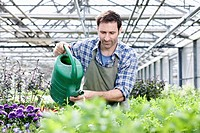 Germany, Bavaria, Munich, Mature man in greenhouse watering rocket plant