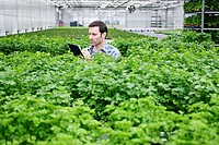 Germany, Bavaria, Munich, Mature man in greenhouse between parlsey plants with clip board (thumbnail)
