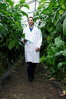 Germany, Bavaria, Munich, Scientist in greenhouse walking between aubergine plants