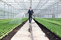 Germany, Bavaria, Munich, Mature man in greenhouse watering seedlings