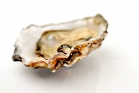 single oyster with narrow DOF