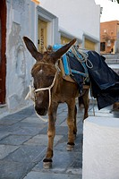 Donkey walking past historic buildings in village