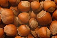 Common Hazelnuts, full frame