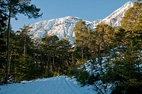 Winter forest with mountains