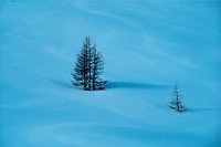 High angle view of two bare pine trees in snow