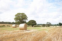 Freshly cut field with hay bails