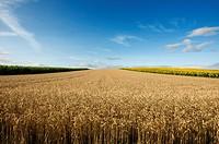 Agricultural landscape, Limagne, France